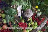 Foraged wild plants for food